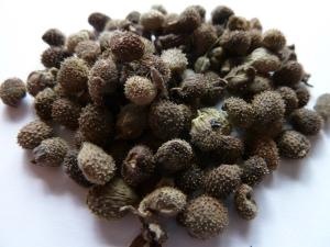 CYGR seed