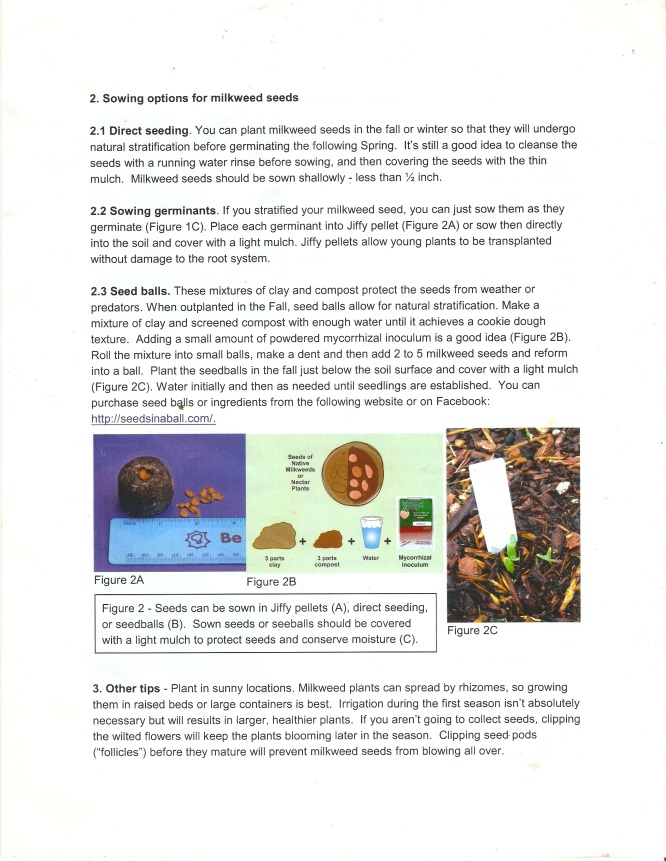 Instructions for seed germination of milkweed species (Asclepias spp.). Page 2