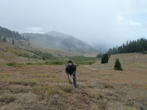 Picking coyote mint (Monardella odoratissima) and sulphur flower (Eriogonum umbellatum) in the first snow flurries of the season in the high country of the Klamath-Siskiyou.