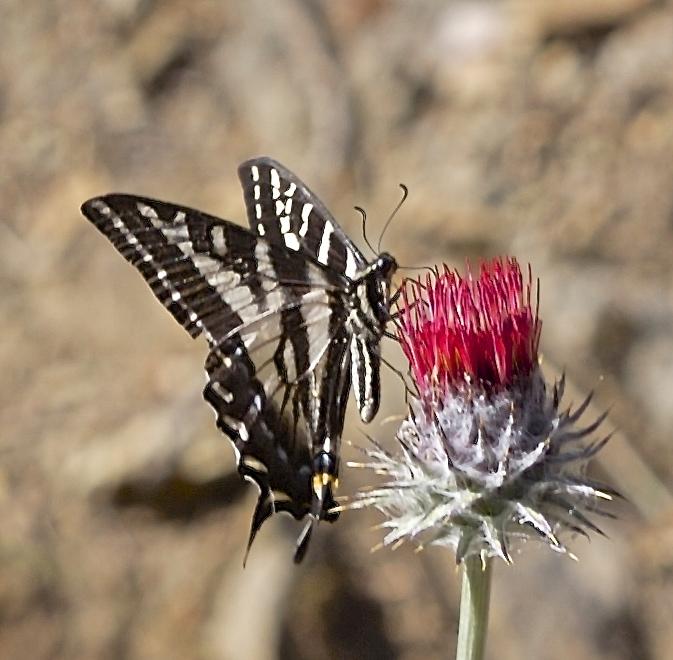 8 formas de atraer pájaros y mariposas | Viviendo la vida rural