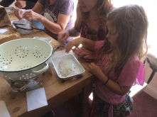 Klamath-Siskiyou Native Seed's hands-on native seed cleaning workshop at Sanctuary One