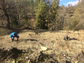 Planting native pollinator plants on public land along the Applegate River.